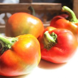 sweet red spanish capsicums for stuffing